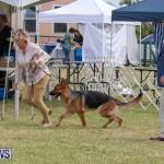 Devil's Isle All Breed Club's Bermuda International Championship Dog Show, October 20 2018-8276