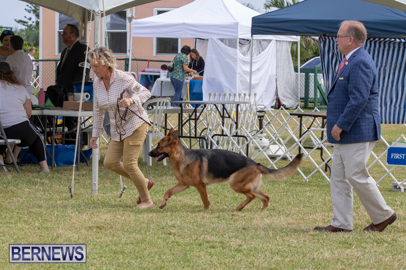 Devils-Isle-All-Breed-Clubs-Bermuda-International-Championship-Dog-Show-October-20-2018-8276