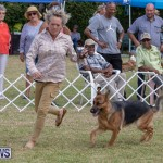 Devil's Isle All Breed Club's Bermuda International Championship Dog Show, October 20 2018-8279