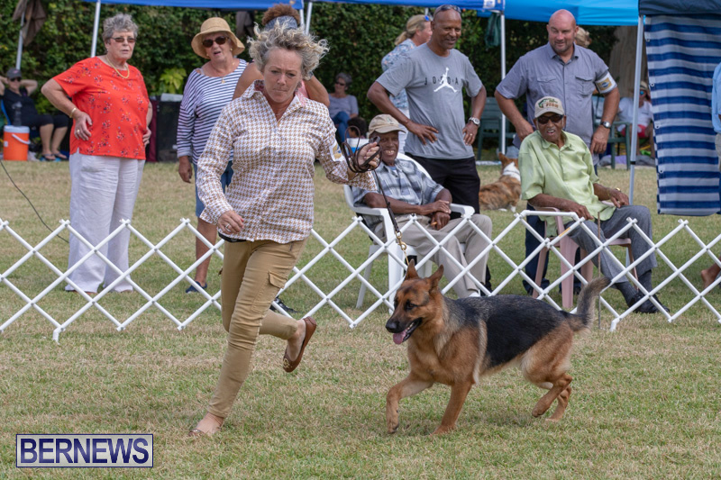 Devils-Isle-All-Breed-Clubs-Bermuda-International-Championship-Dog-Show-October-20-2018-8279