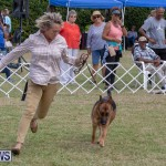 Devil's Isle All Breed Club's Bermuda International Championship Dog Show, October 20 2018-8281