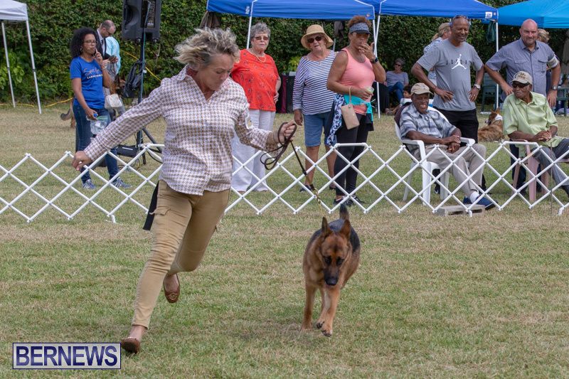 Devils-Isle-All-Breed-Clubs-Bermuda-International-Championship-Dog-Show-October-20-2018-8281