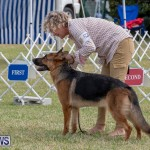 Devil's Isle All Breed Club's Bermuda International Championship Dog Show, October 20 2018-8285