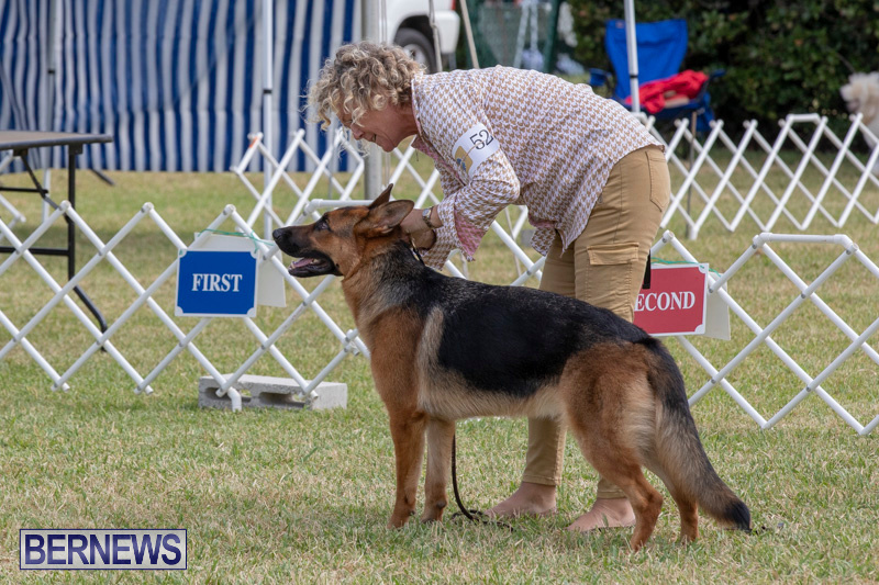 Devils-Isle-All-Breed-Clubs-Bermuda-International-Championship-Dog-Show-October-20-2018-8285