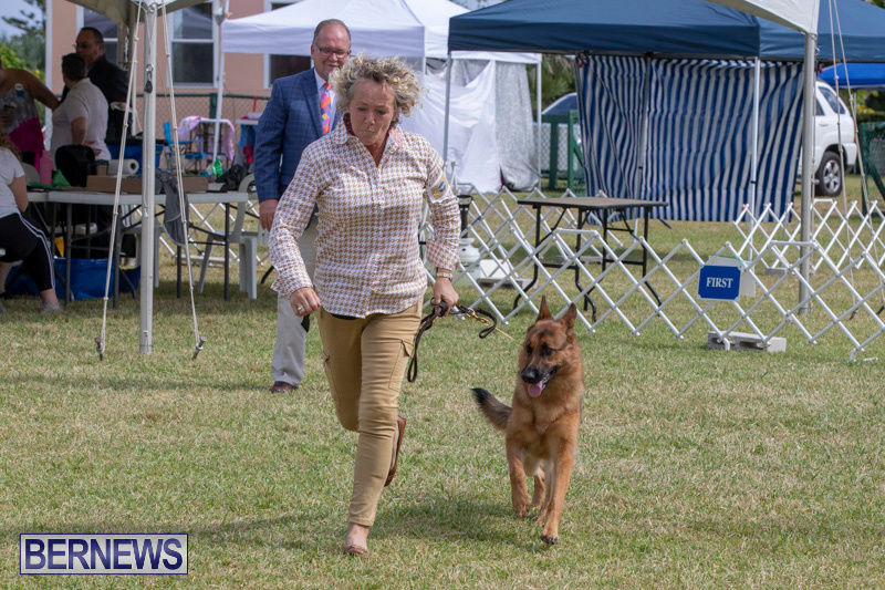 Devils-Isle-All-Breed-Clubs-Bermuda-International-Championship-Dog-Show-October-20-2018-8293