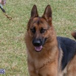 Devil's Isle All Breed Club's Bermuda International Championship Dog Show, October 20 2018-8296