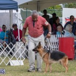 Devil's Isle All Breed Club's Bermuda International Championship Dog Show, October 20 2018-8301