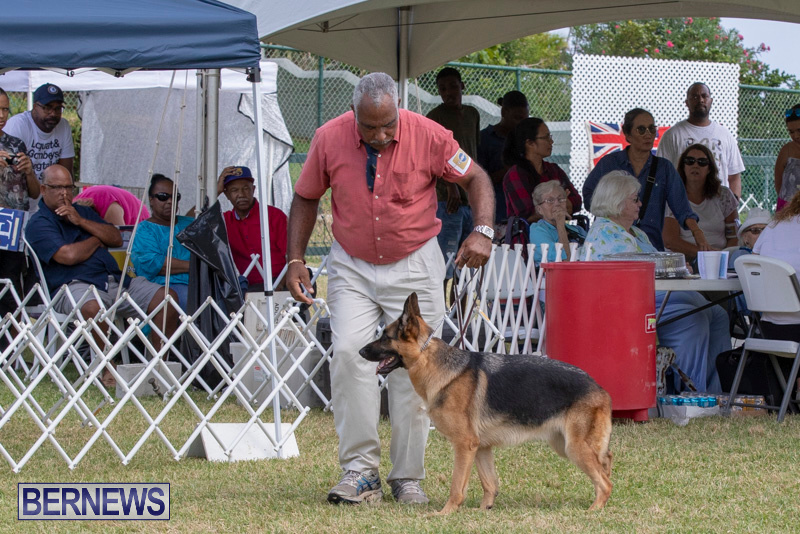 Devils-Isle-All-Breed-Clubs-Bermuda-International-Championship-Dog-Show-October-20-2018-8301
