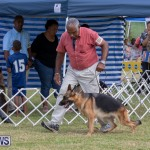 Devil's Isle All Breed Club's Bermuda International Championship Dog Show, October 20 2018-8304