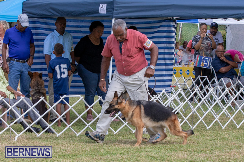 Devils-Isle-All-Breed-Clubs-Bermuda-International-Championship-Dog-Show-October-20-2018-8304