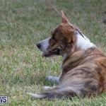 Devil's Isle All Breed Club's Bermuda International Championship Dog Show, October 20 2018-8309