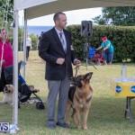 Devil's Isle All Breed Club's Bermuda International Championship Dog Show, October 20 2018-8313