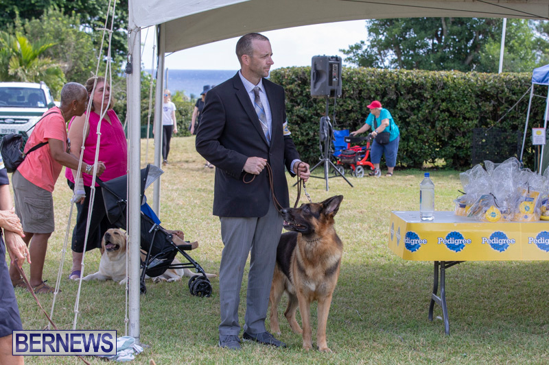 Devils-Isle-All-Breed-Clubs-Bermuda-International-Championship-Dog-Show-October-20-2018-8313
