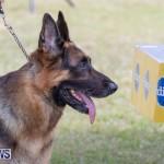 Devil's Isle All Breed Club's Bermuda International Championship Dog Show, October 20 2018-8315