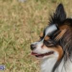 Devil's Isle All Breed Club's Bermuda International Championship Dog Show, October 20 2018-8334