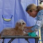 Devil's Isle All Breed Club's Bermuda International Championship Dog Show, October 20 2018-8372