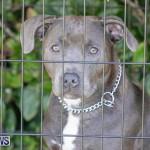 Devil's Isle All Breed Club's Bermuda International Championship Dog Show, October 20 2018-8380