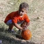 J&J's Pick Your Own Pumpkin Bermuda Oct 12 2018 (1)