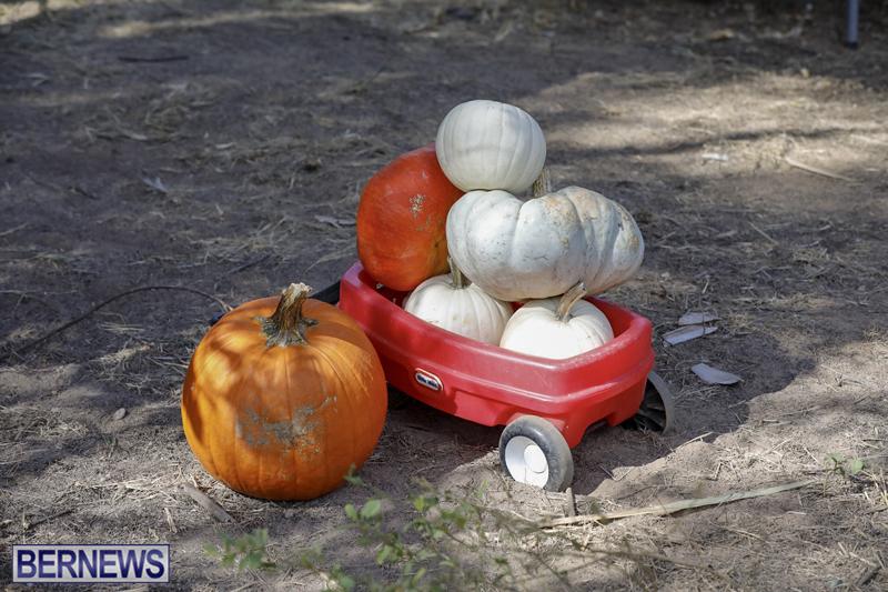 JJs-Pick-Your-Own-Pumpkin-Bermuda-Oct-12-2018-25