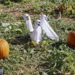 J&J's Pick Your Own Pumpkin Bermuda Oct 12 2018 (28)