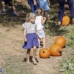 J&J's Pick Your Own Pumpkin Bermuda Oct 12 2018 (31)