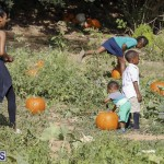 J&J's Pick Your Own Pumpkin Bermuda Oct 12 2018 (36)