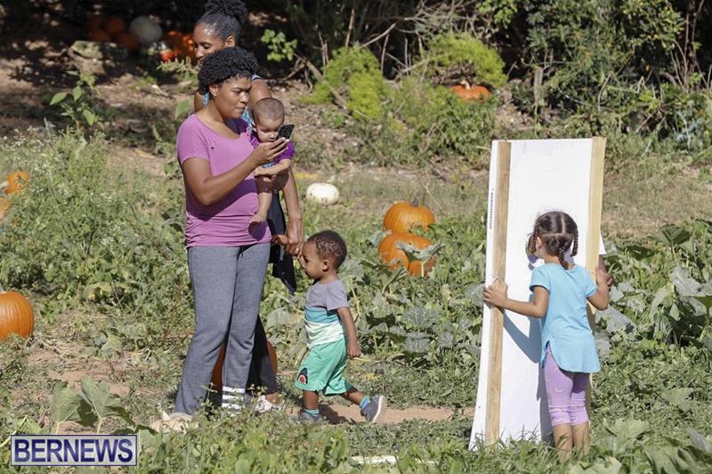 JJs-Pick-Your-Own-Pumpkin-Bermuda-Oct-12-2018-38