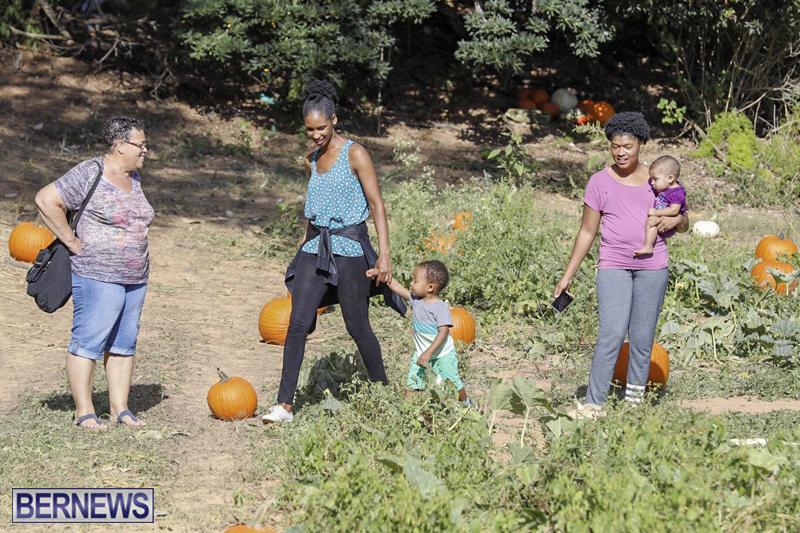 JJs-Pick-Your-Own-Pumpkin-Bermuda-Oct-12-2018-39