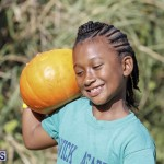 J&J's Pick Your Own Pumpkin Bermuda Oct 12 2018 (42)