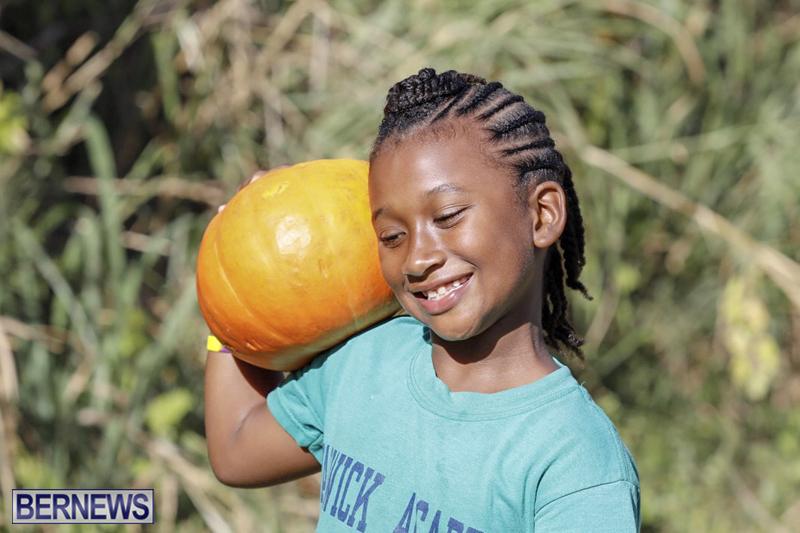 JJs-Pick-Your-Own-Pumpkin-Bermuda-Oct-12-2018-42