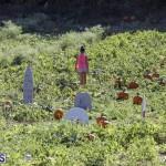 J&J's Pick Your Own Pumpkin Bermuda Oct 12 2018 (5)