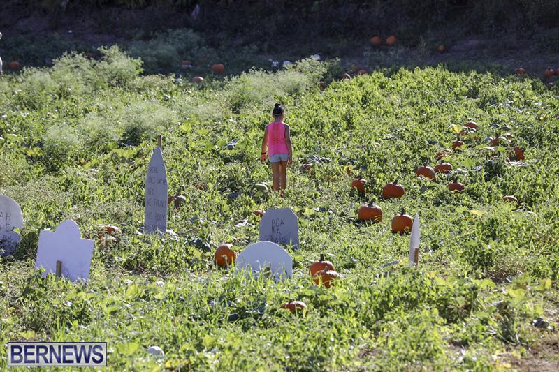 JJs-Pick-Your-Own-Pumpkin-Bermuda-Oct-12-2018-5