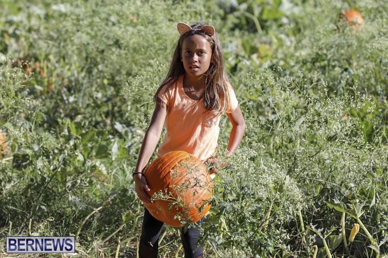 JJs-Pick-Your-Own-Pumpkin-Bermuda-Oct-12-2018-53