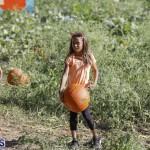 J&J's Pick Your Own Pumpkin Bermuda Oct 12 2018 (54)