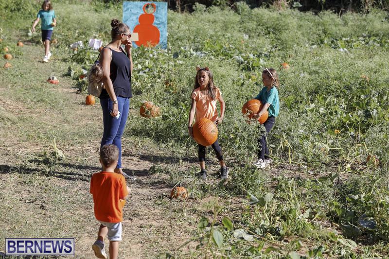 JJs-Pick-Your-Own-Pumpkin-Bermuda-Oct-12-2018-55