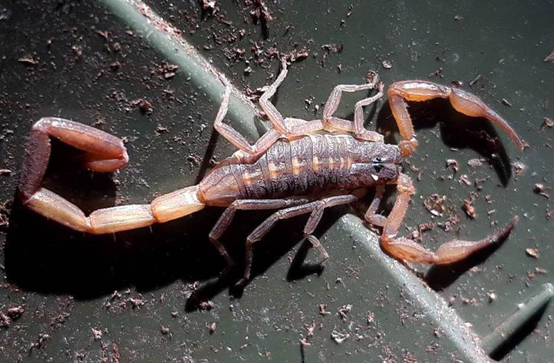 Scorpion Bermuda October 2018 (1)