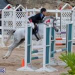 Bermuda Equestrian Federation Jumper Show, November 24 2018-0096