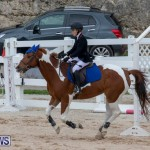 Bermuda Equestrian Federation Jumper Show, November 24 2018-0149