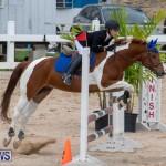 Bermuda Equestrian Federation Jumper Show, November 24 2018-0158
