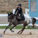 Bermuda Equestrian Federation Jumper Show, November 24 2018-0258