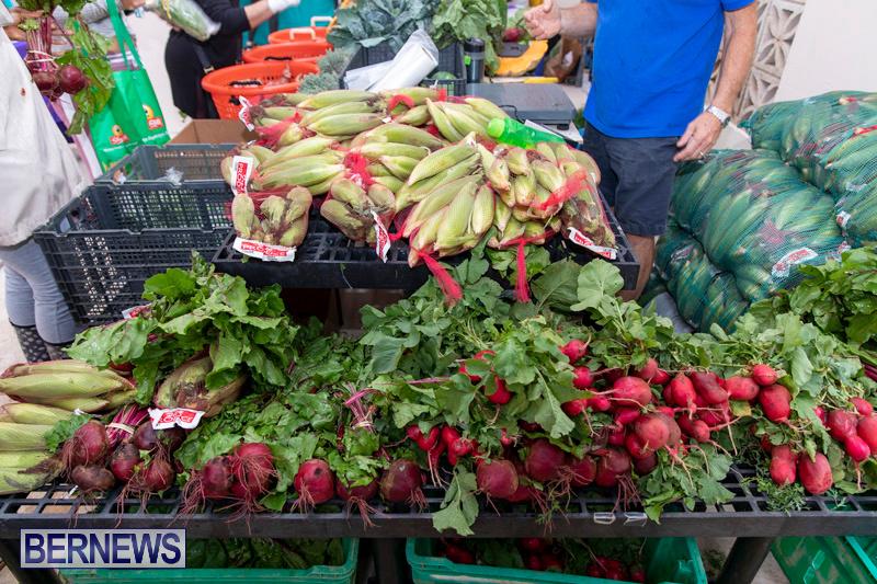 Farmers-Market-Botanical-Gardens-Bermuda-College-November-17-2018-9008