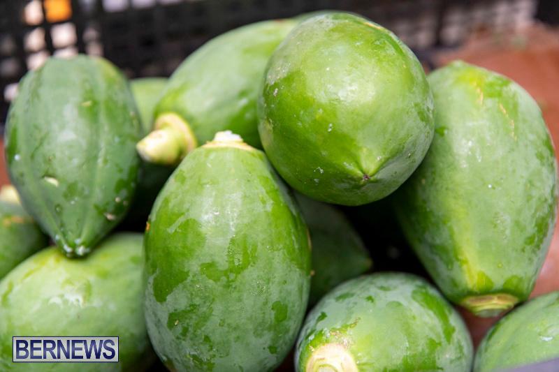 Farmers-Market-Botanical-Gardens-Bermuda-College-November-17-2018-9014