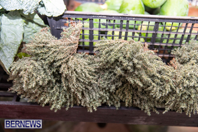 Farmers-Market-Botanical-Gardens-Bermuda-College-November-17-2018-9018