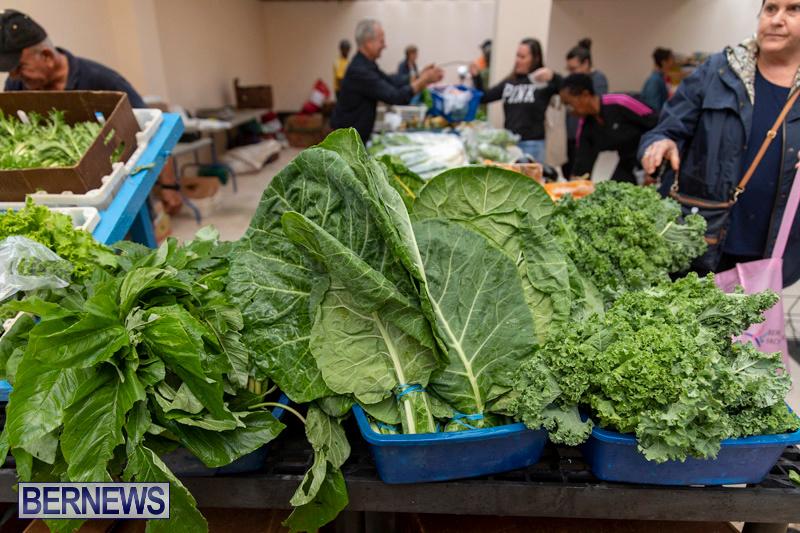 Farmers-Market-Botanical-Gardens-Bermuda-College-November-17-2018-9094