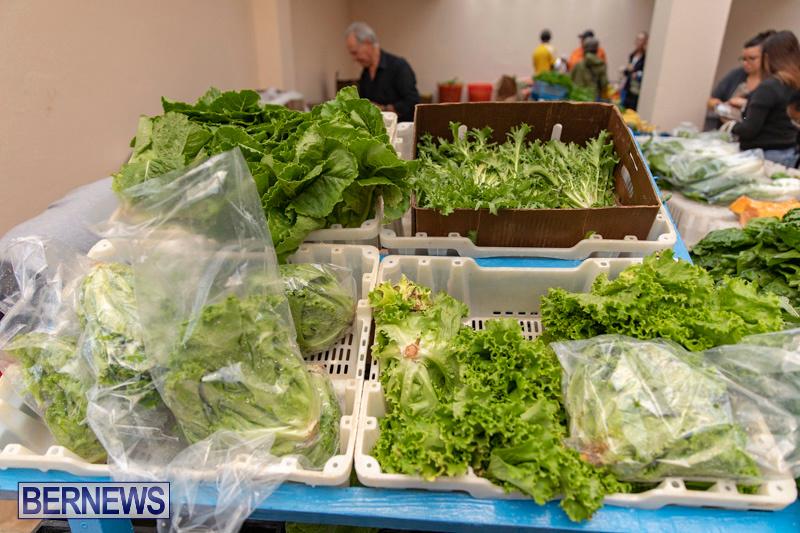 Farmers-Market-Botanical-Gardens-Bermuda-College-November-17-2018-9095