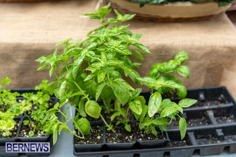 Farmers-Market-Botanical-Gardens-Bermuda-College-November-17-2018-9102