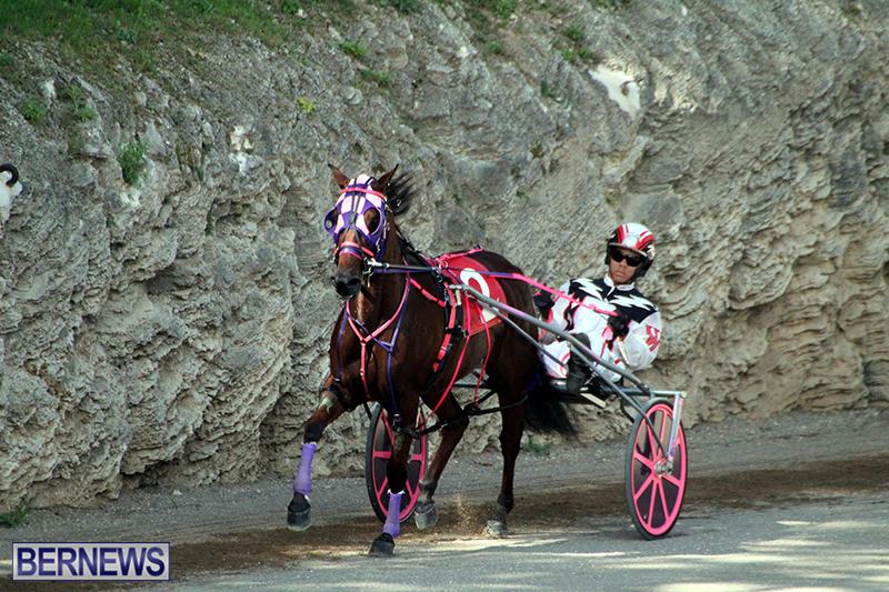 Harness-Pony-Bermuda-Nov-14-2018-1
