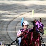 Harness Pony Bermuda Nov 14 2018 (10)