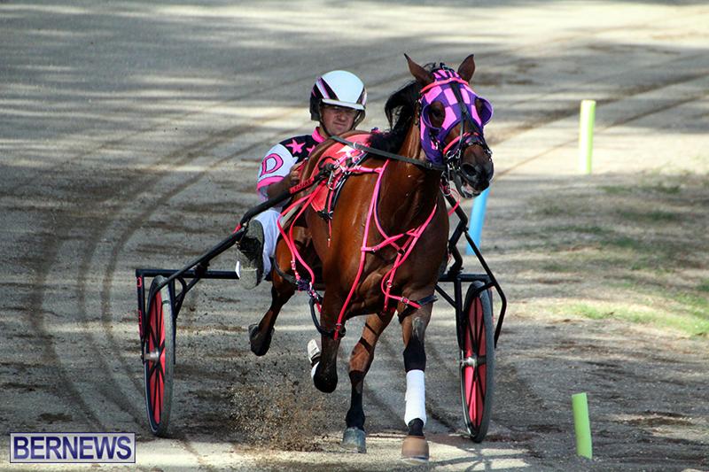 Harness-Pony-Bermuda-Nov-14-2018-11