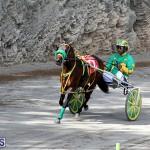 Harness Pony Bermuda Nov 14 2018 (19)
